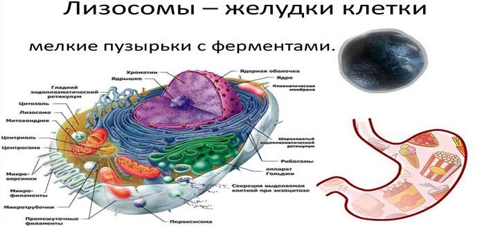 suhoe-golodaniie-36-chasov-polza