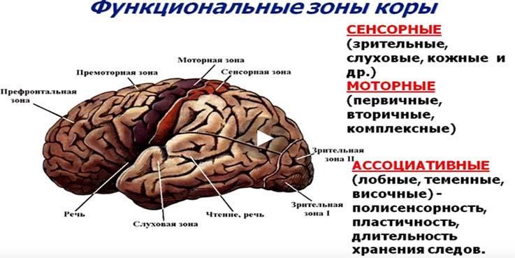 kak-razvit-oba-polushariya-golovnogo-mozga-vzroslomu
