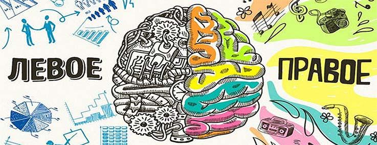 kak-razvit-oba-polushariya-golovnogo-mozga