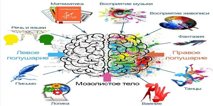 kak-razvivat-mozg-i-pamyat-vzroslomu